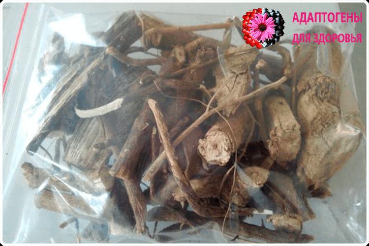 корни аралии маньчжурской